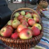 III Branickie Święto Owoców i Warzyw ,, Czerwone jabłuszko ''