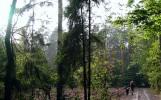 Brzeziny 2, fot. B. Sozoniuk