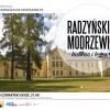 Radzyńskie modrzewie - historia i legenda