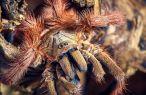 Wystawa Fascynujący Świat Pająków