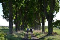 Szlak rowerowy Doliną Tyśmienicy