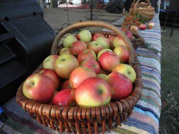 III Branickie Święto Owoców i Warzyw Czerwone jabłuszko