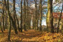 Aleja lipowa w parku w Woli Osowińskiej