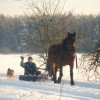 winter - Stable Borysiuk